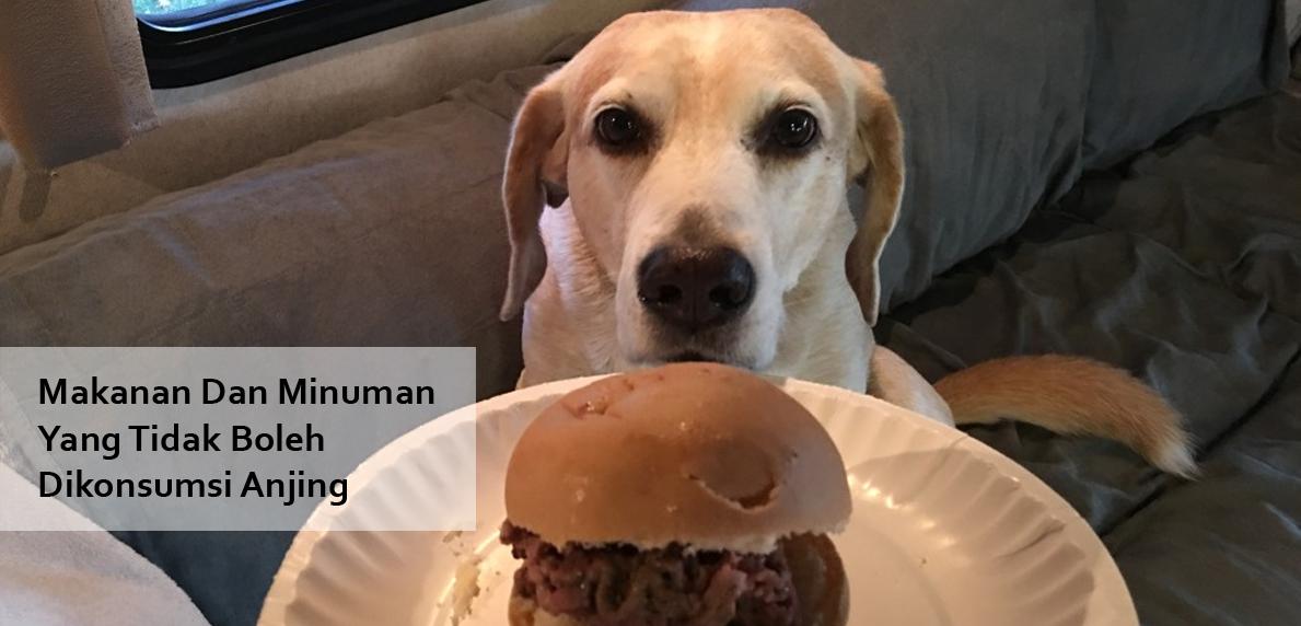 Makanan Dan Minuman Yang Tidak Boleh Dikonsumsi Anjing