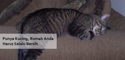 Punya Kucing, Rumah Anda Harus Selalu Bersih - simasinsurtech