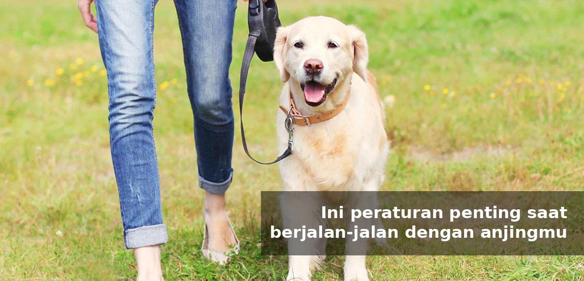 Ini peraturan penting saat berjalan-jalan dengan anjingmu - Simas Insurtech