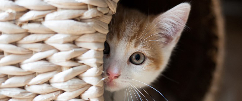 tips memlihara kucing selama pandemi